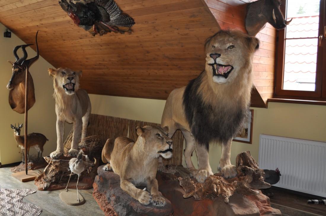 Muzeum Safari, Holčovice - Jelení