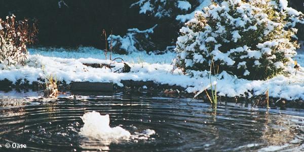 Jak p iprav me zahradn jez rko na zimu l nky for Goldfische im teich im winter