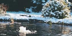Koupac jez rko praha v chod fotogalerie zahradn for Goldfische im winter im teich