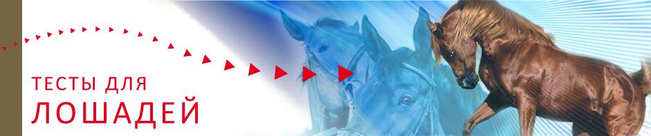 Тесты для лошадей