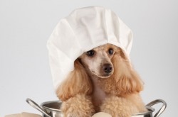 kuchar - náhled