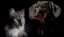 catdog - náhled