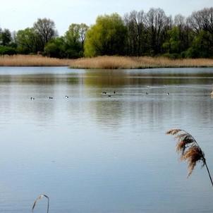 Velký Pavlovický rybník